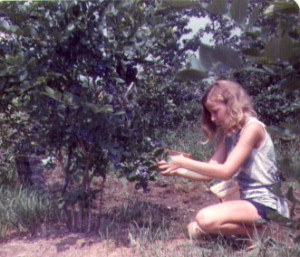denise-picking-berries
